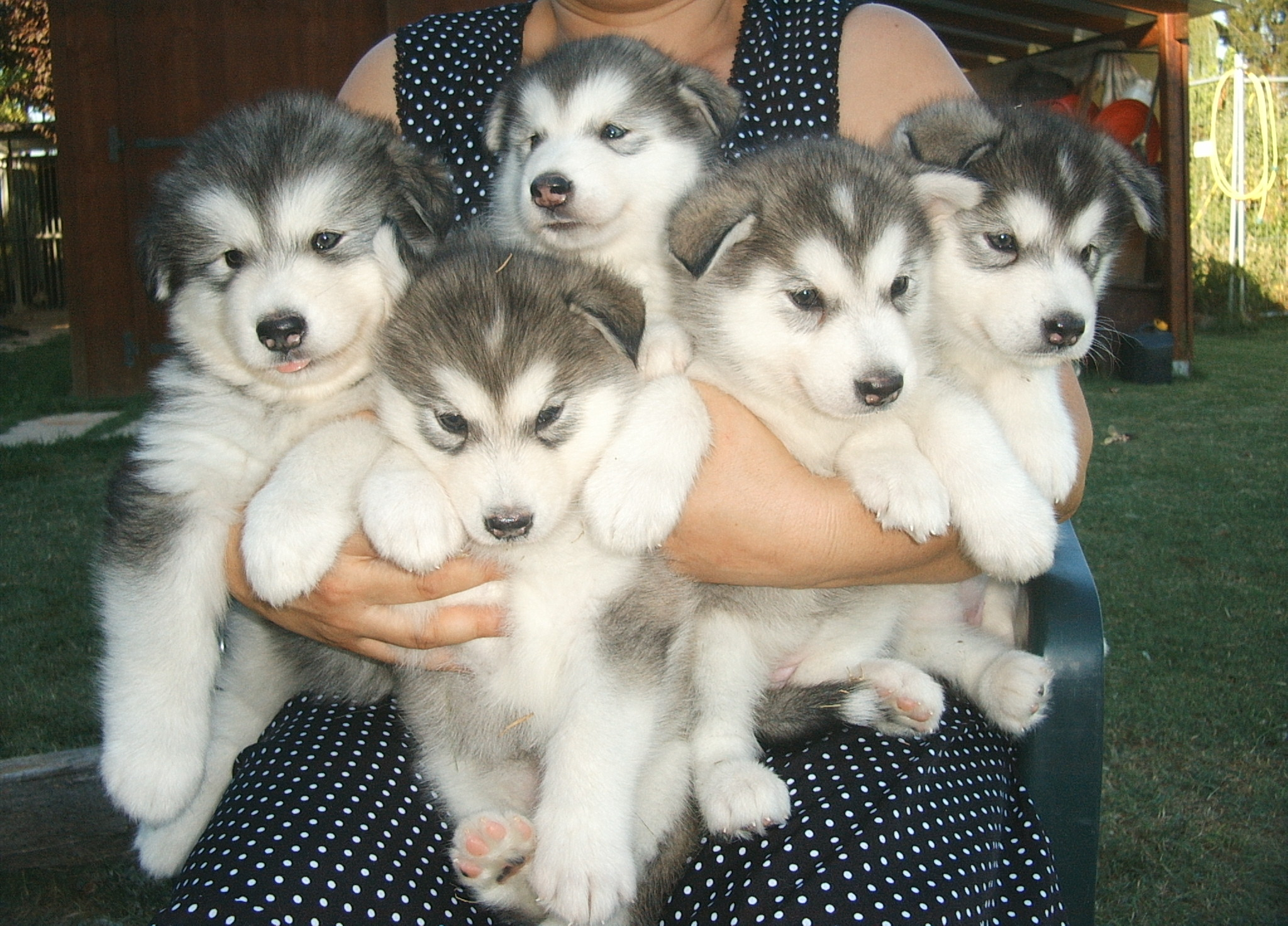 Displaying 20> Images For - Different Breeds Of Puppies...