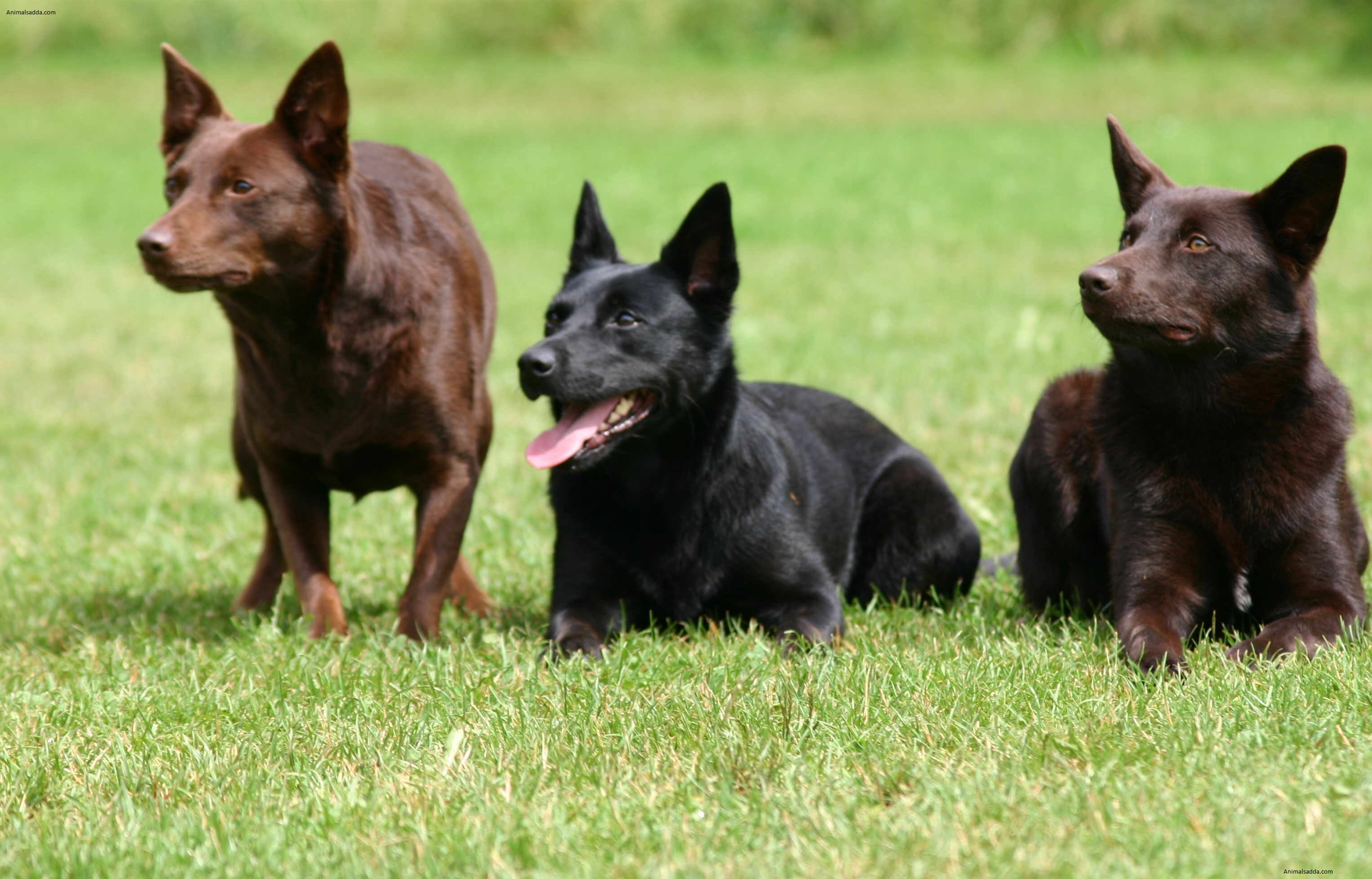 How To Keep Dogs From Breeding