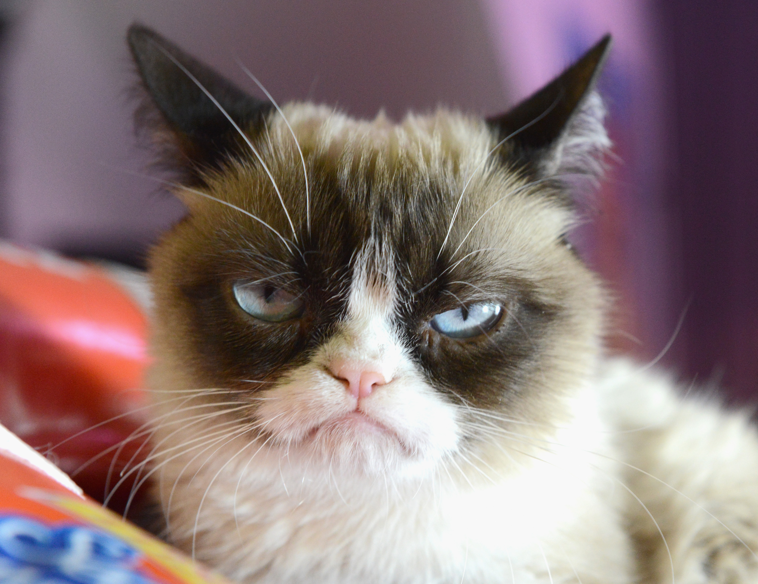 The World S Grumpiest Cat 40 Funniest Grumpy Cat Memes