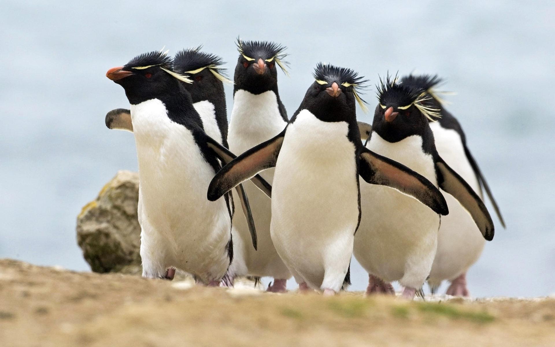 Penguin gang bang