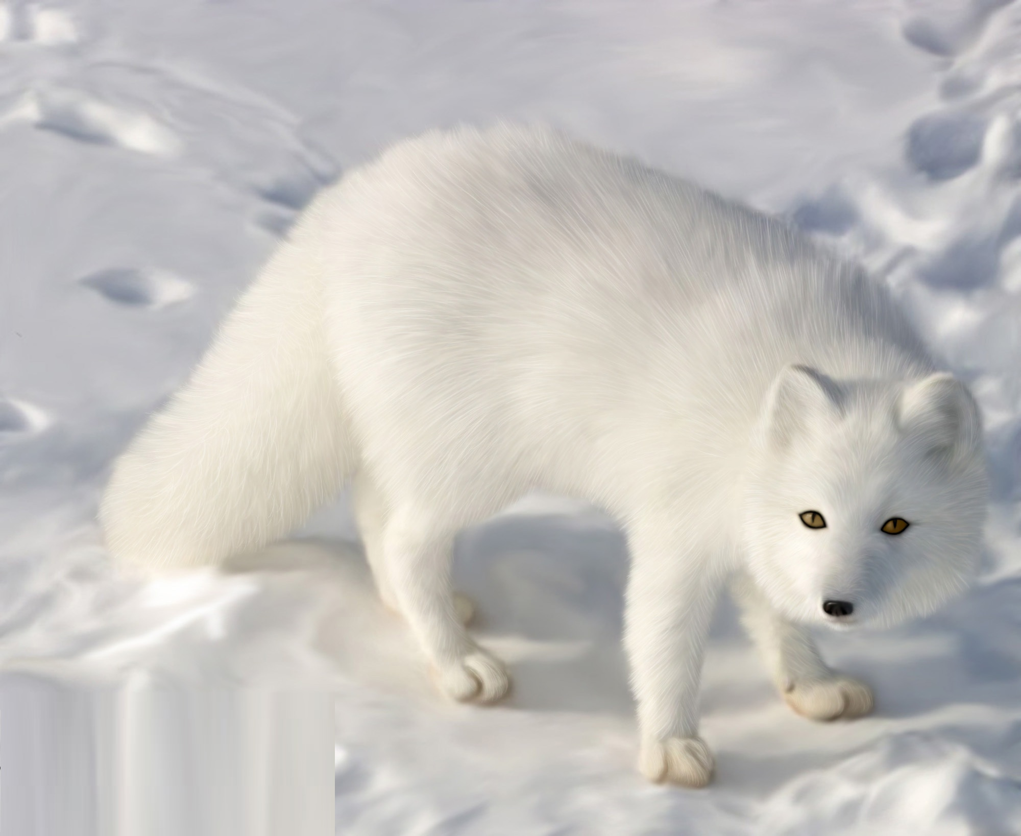 Arctic Fox - Pictures, Diet, Breeding, Life Cycle, Facts ...