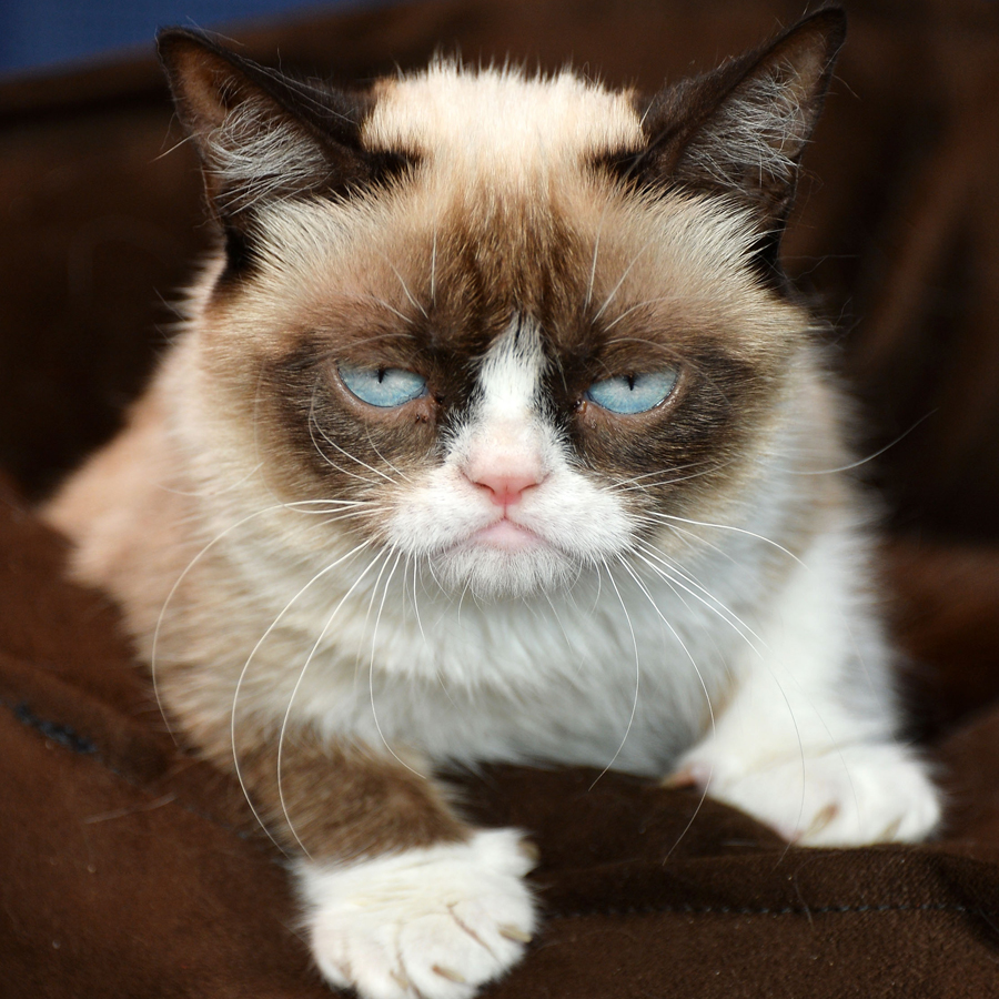 Grumpy Cat Breed Personality History Information