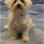 Cairmal Dog
