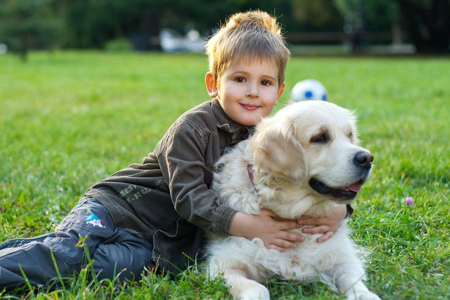 Kid Friendly Breed Of Dogs