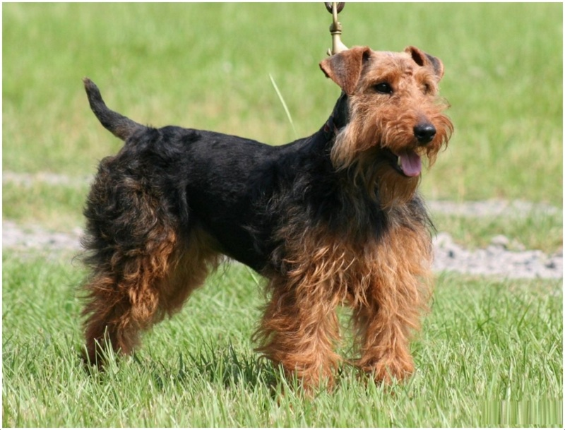 Welsh Dog Names For Males