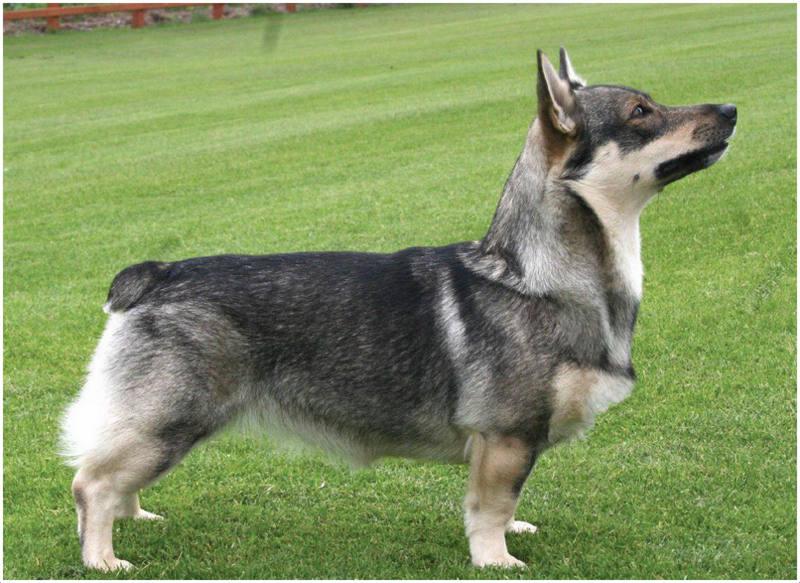 Strange Dog Breeds Names