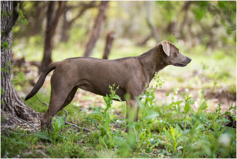 Is Blue Dog Food Good For Dogs With Allergies