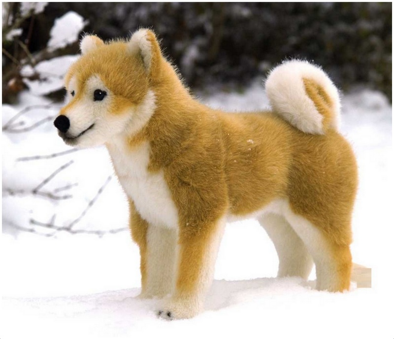 how much is a shiba inu