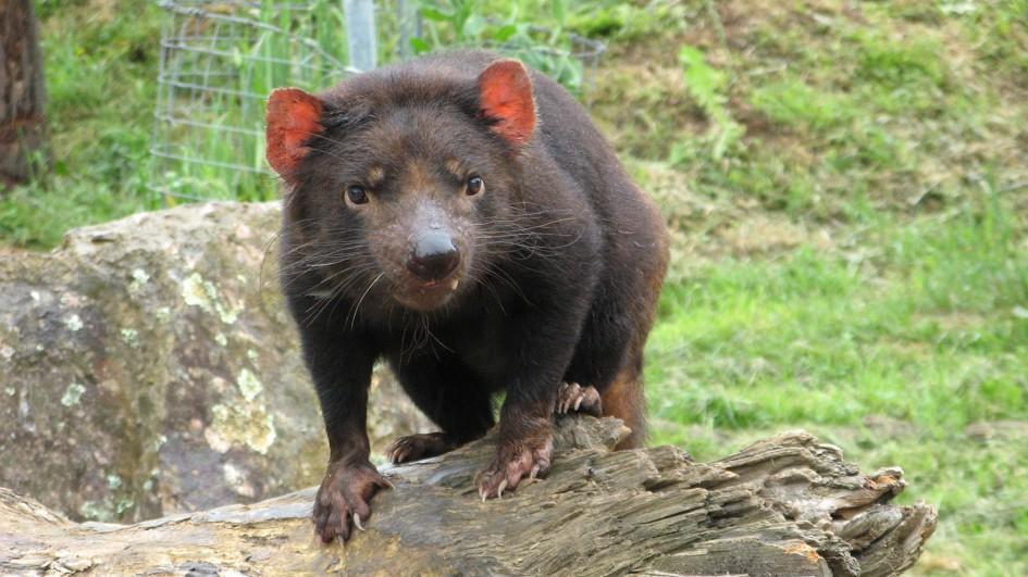 mom adult services hobart tasmania