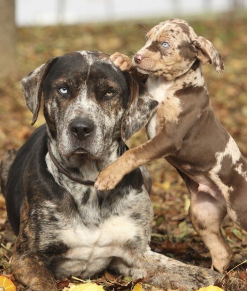 Central Florida Popular Dogs For Sale
