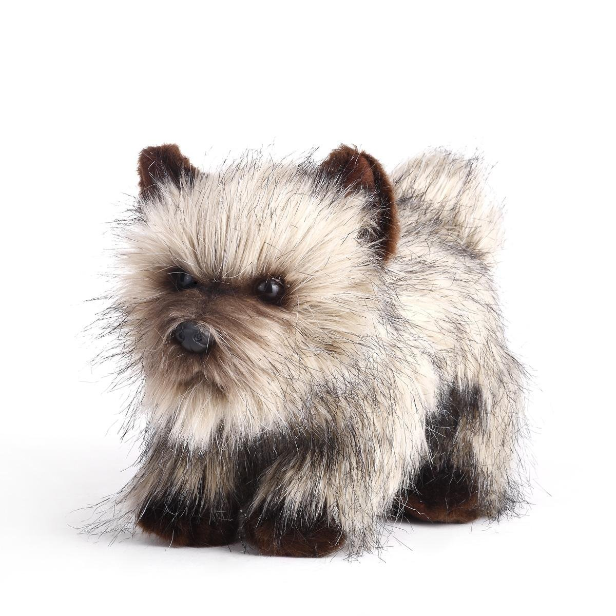 Cairn Terrier - Facts, Pictures, Puppies, Temperament