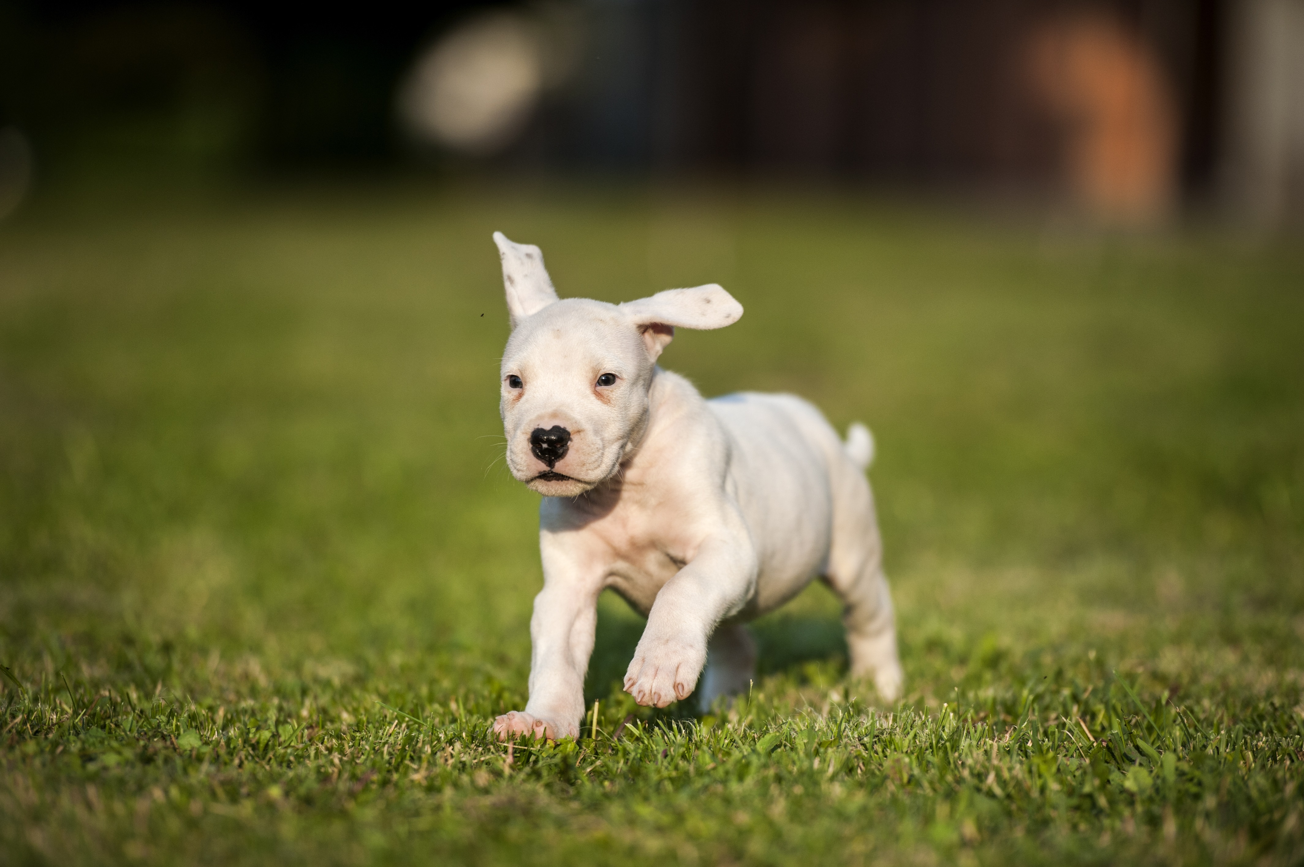 Hunting Dog Obedience Training
