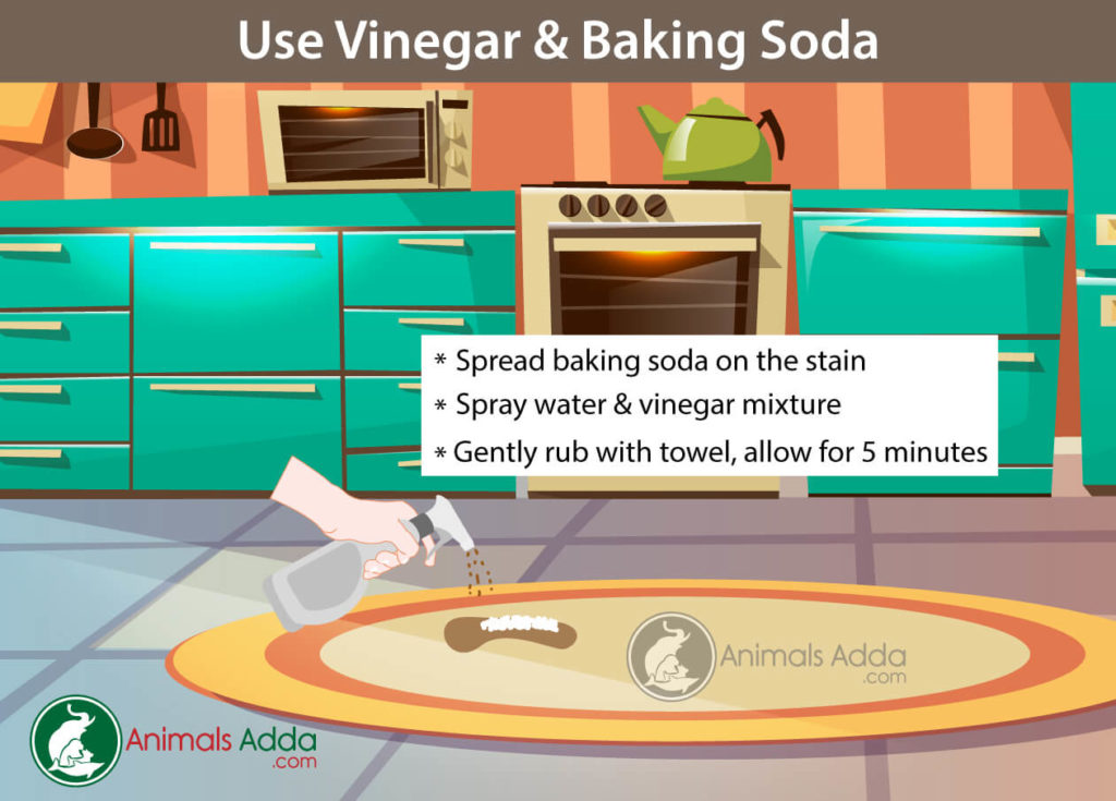 Homemade Cleaners To Remove Pet Stains and Odors