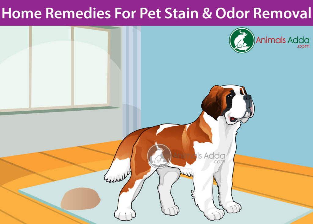 How Do You Remove Dog Odor From House