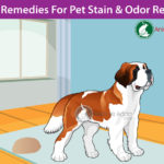 Natural Homemade Cleaners To Remove Pet Stains and Odors