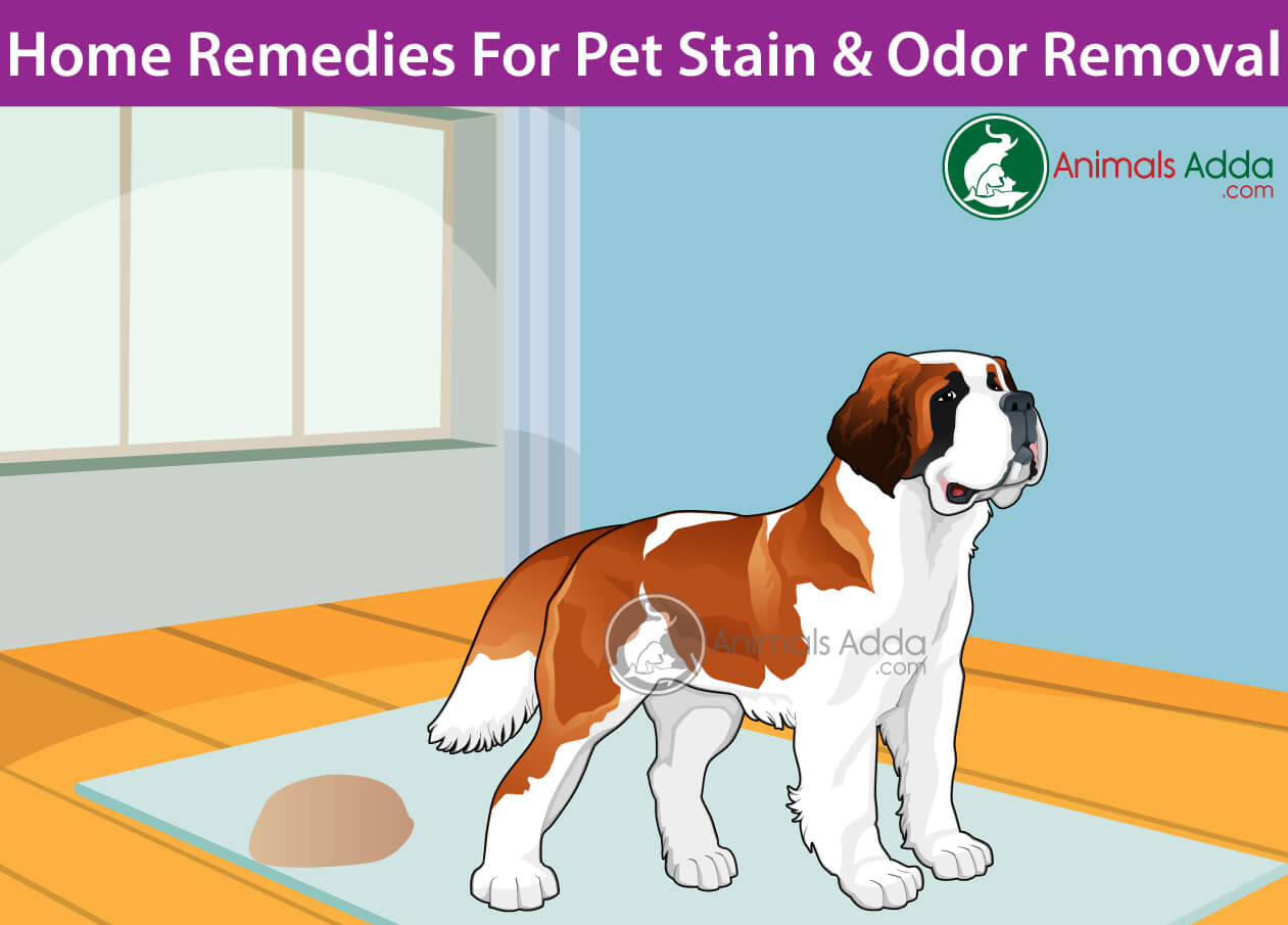 Diy Spray Natural Homemade Cleaners To Remove Pet Stains